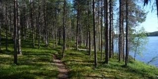 Basic Facts To Be Aware Of When Referring To Waymarking In Finland