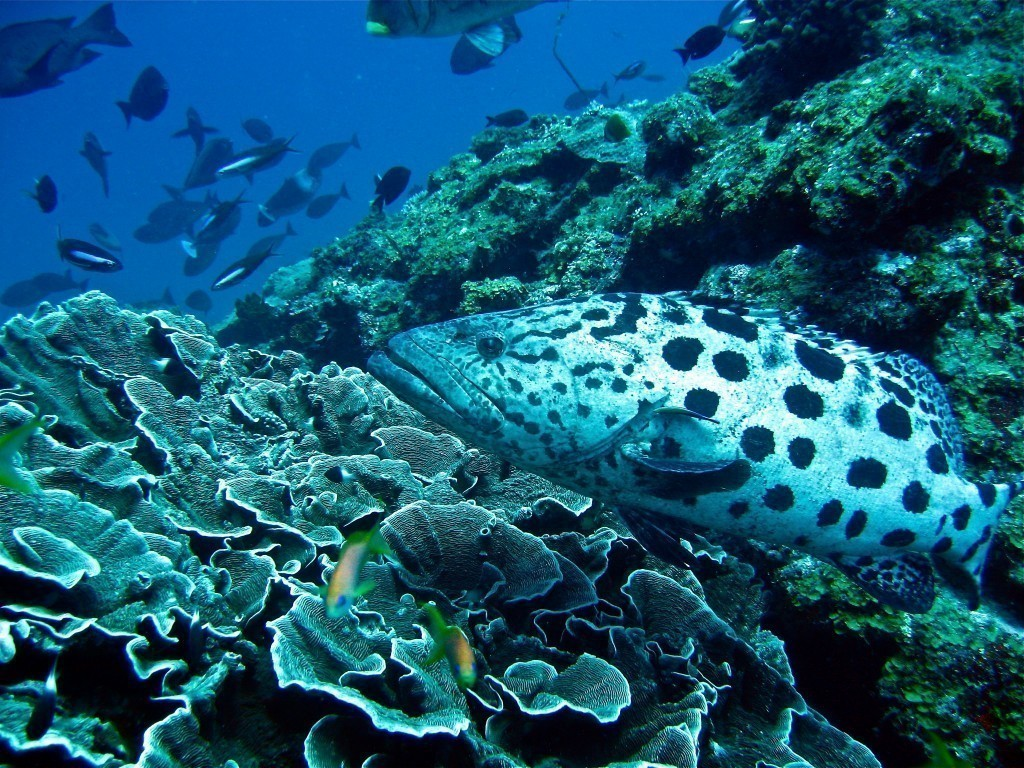 Best diving spots in hawaii travel tips for Molokai fish and dive