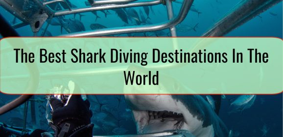 The Best Shark Diving Destinations In The World