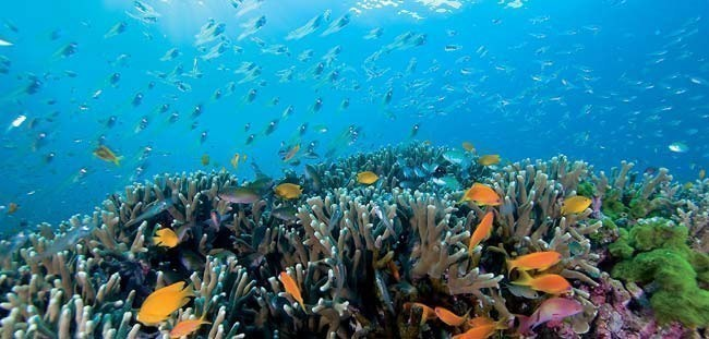 Best scuba diving sites in thailand travel tips - Where to dive in thailand ...