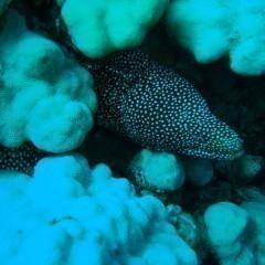 Best Scuba Diving Sites In Argentina