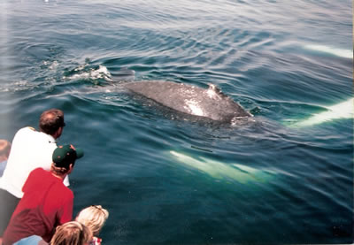 Best Whale Watching Tours In Portland Maine