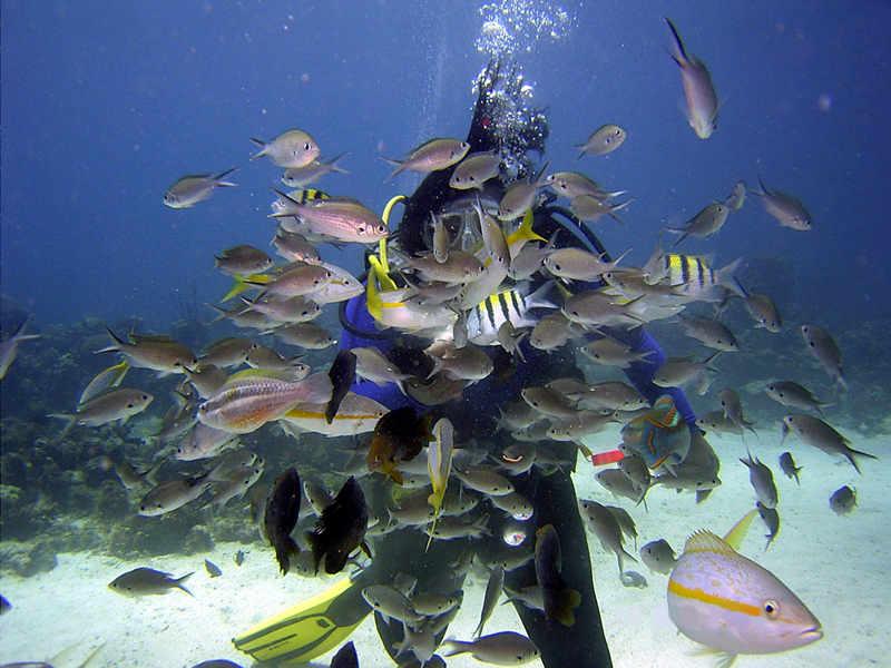 scuba diving saint lucia 2