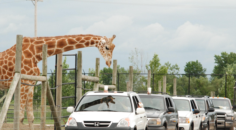 Safari In Ohio >> African Safari In Ohio African Safari Wildlife Park Travel Tips