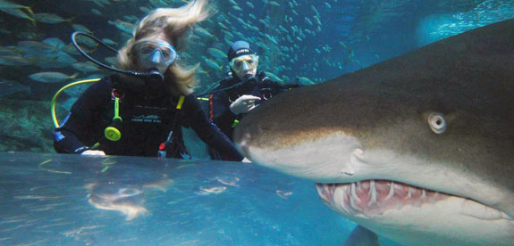 Shark Diving Xtreme