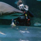 Shark Diving In Sydney, Australia – One Of The Most Interesting Experiences In The Country