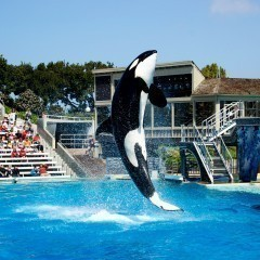 Best Water Parks To Visit In California