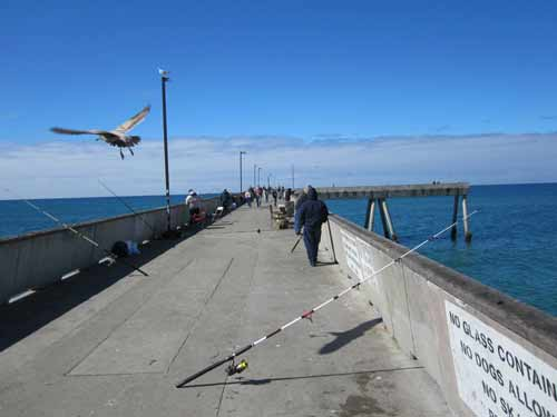 Best fishing spots in san francisco travel tips for Pier fishing tips