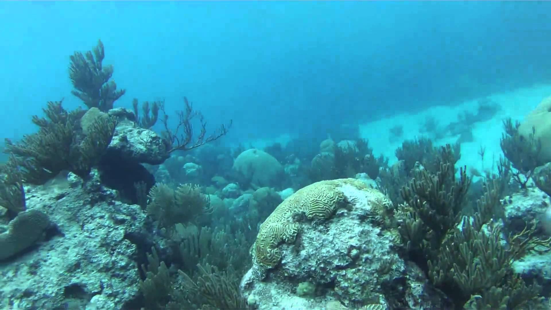 5 bermuda scuba diving sites to enjoy travel tips - Padi dive locations ...
