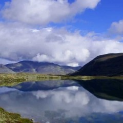 Norway's Incredible Wildlife Watching Destinations