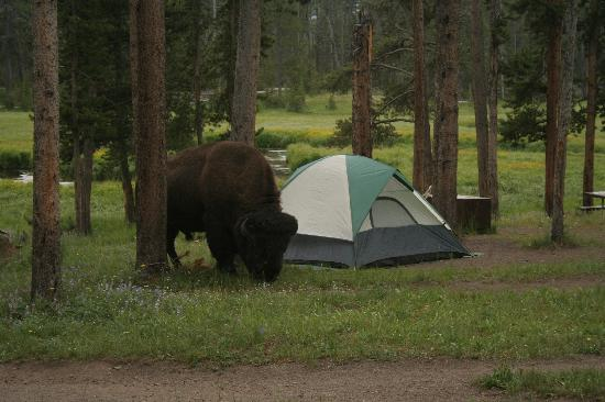 Camping In Yellowstone National Park Travel Tips
