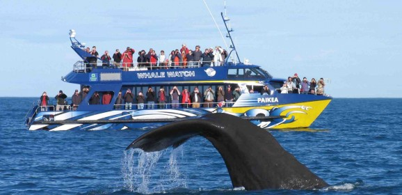 Extreme Travel Activities To Enjoy In South Island, New Zealand