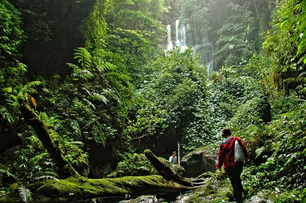Explore The Amazon