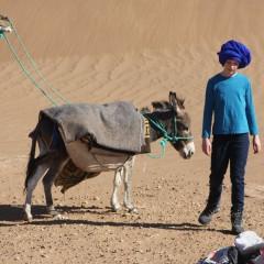 Donkey Trekking In Israel