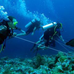 Palau Scuba Diving Overview