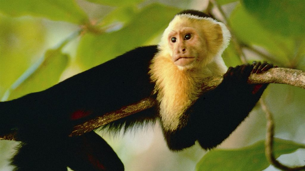 costa rica wildlife tours