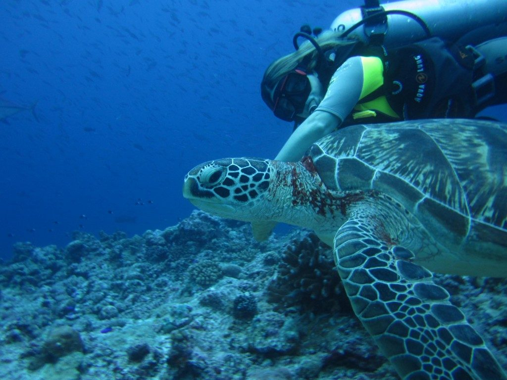 palau scuba diving with turtle