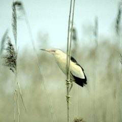 Recommended Bird Watching Spots In Europe