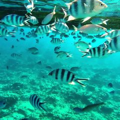 The 7 Best Snorkeling Beaches In Mauritius