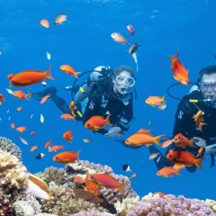 Top 6 Dive Sites In Cebu, Philippines