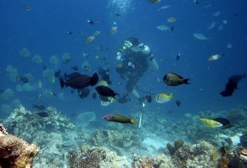 Top 6 Dive Sites In Cebu, Philippines • Travel Tips