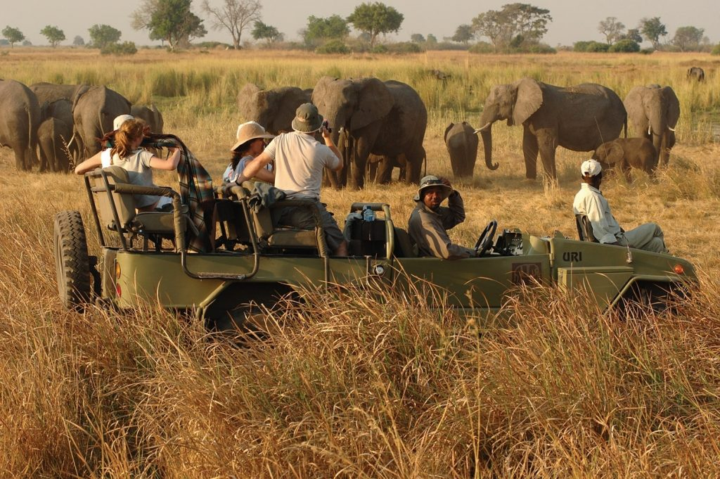 Game Drives Safari In Africa