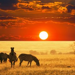 Africa's Incredible Safaris