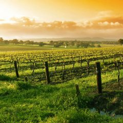 How To Have A Truly Perfect Wine Trip Vacation