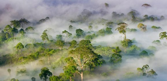 Asia's Top Wildlife Watching Destinations
