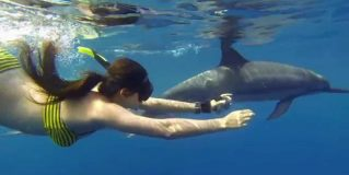 Best Places To Swim With Free Dolphins
