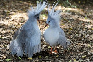 7 Rare Beautiful Birds And Where To Find Them