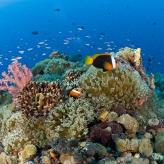Papua New Guinea Scuba Diving Guide – Here Is What You Should Know