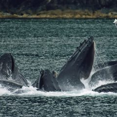 2 Best Whale Watching Options In Ireland