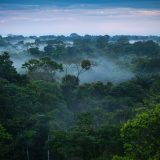 The 7 Best Amazon Wildlife Watching Locations