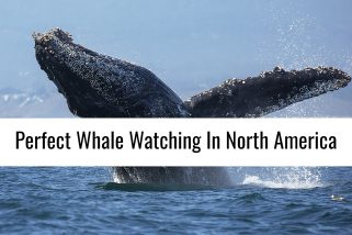 North America's Perfect Whale Watching Locations