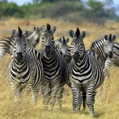 5 incredible things to see in Botswana